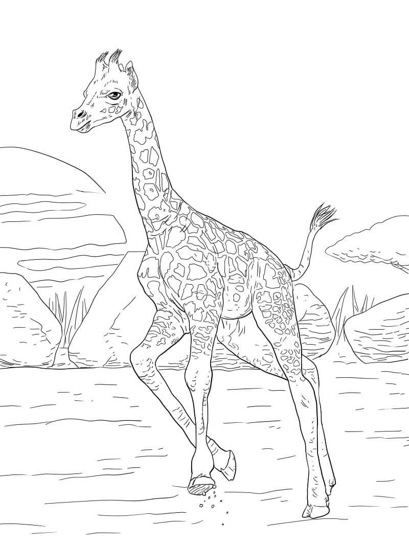 Раскраска нормальный жираф 3