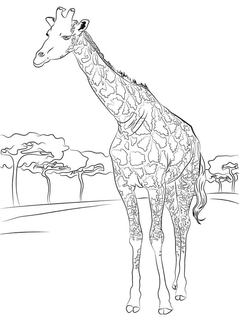 Раскраска нормальный жираф 4