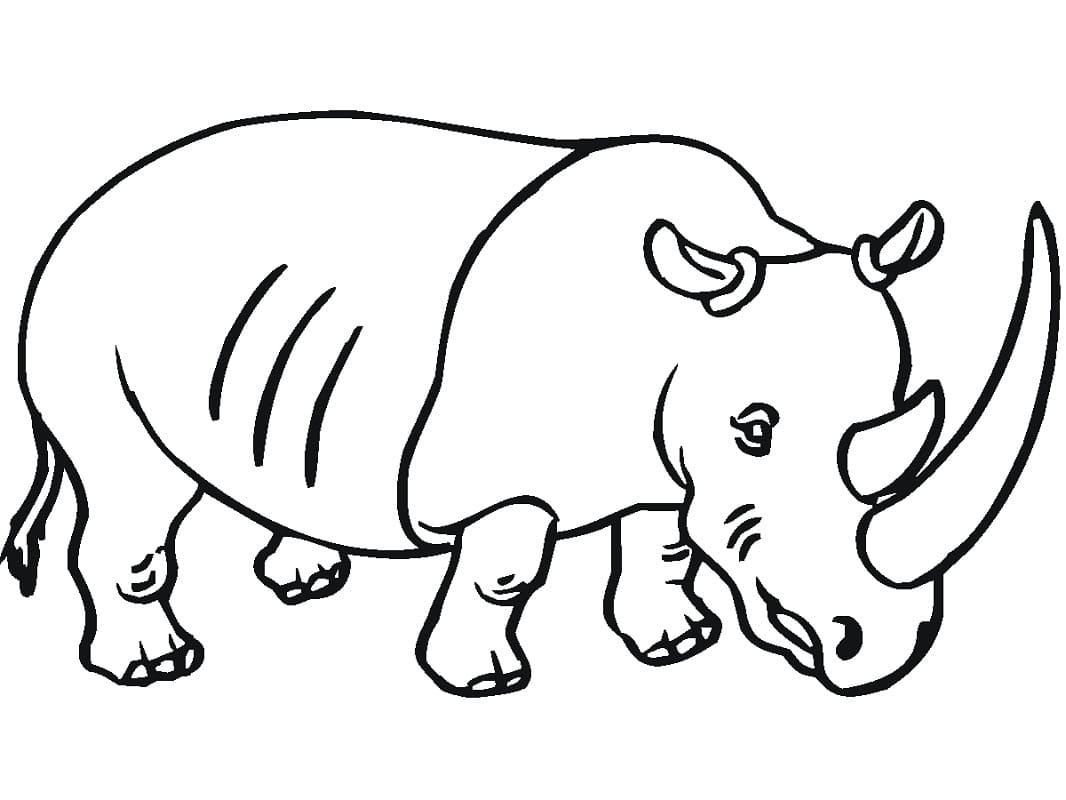 Раскраска Раскраски Носорог