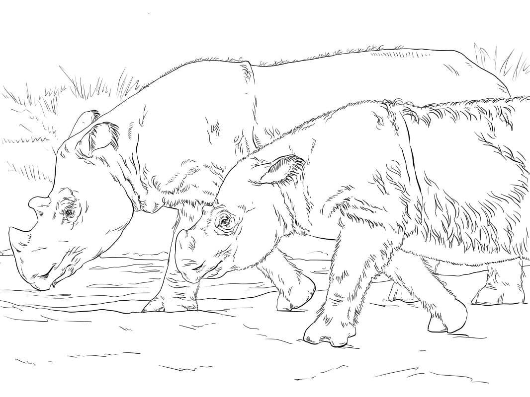 Раскраска носорога 3