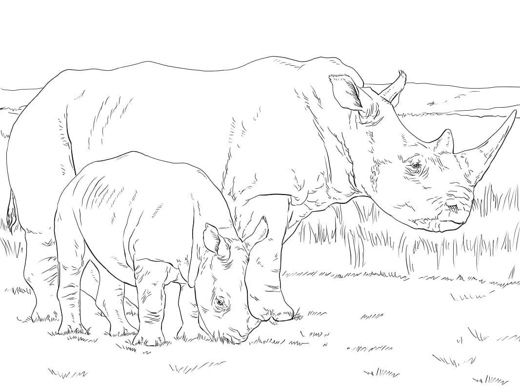 Раскраска носорога 4