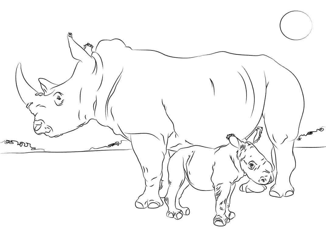 Раскраска носорога