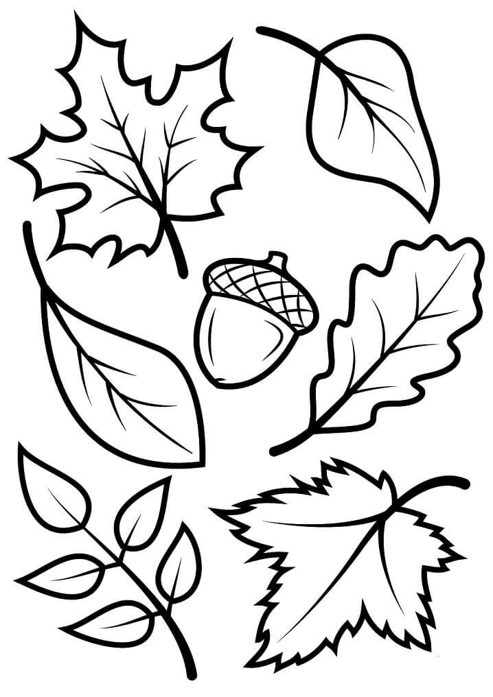 Раскраска Осенние листья 1