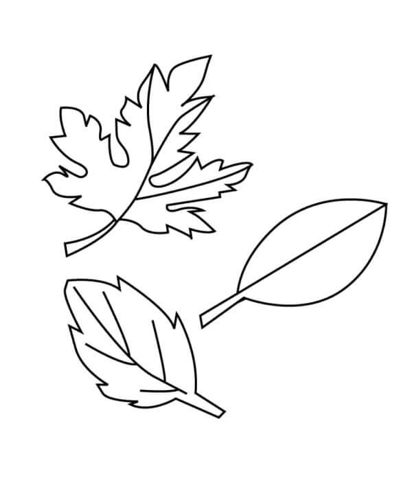 Раскраска Осенние листья 10