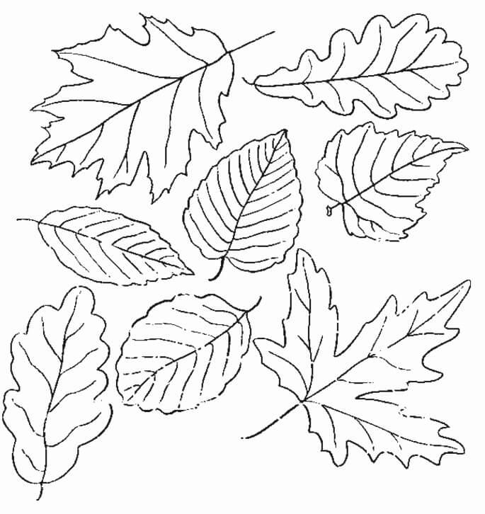 Раскраска Раскраски осенние листья
