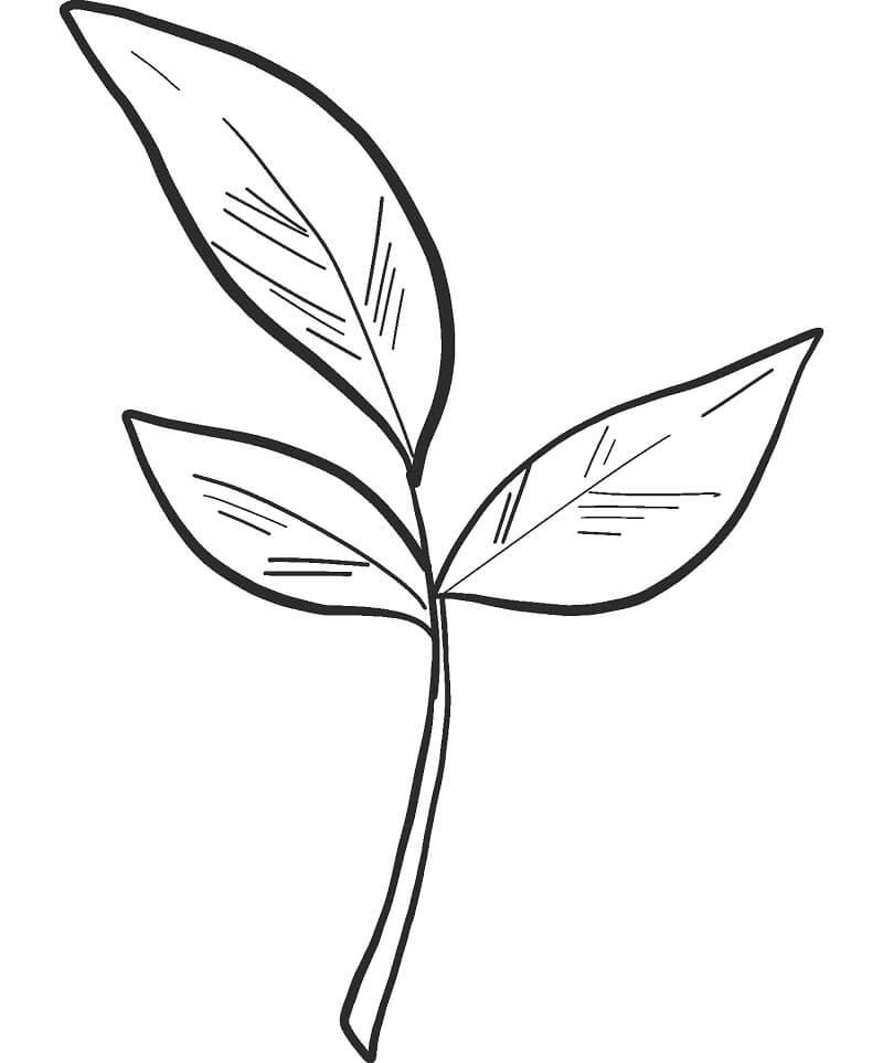 Раскраска Осенние листья 14