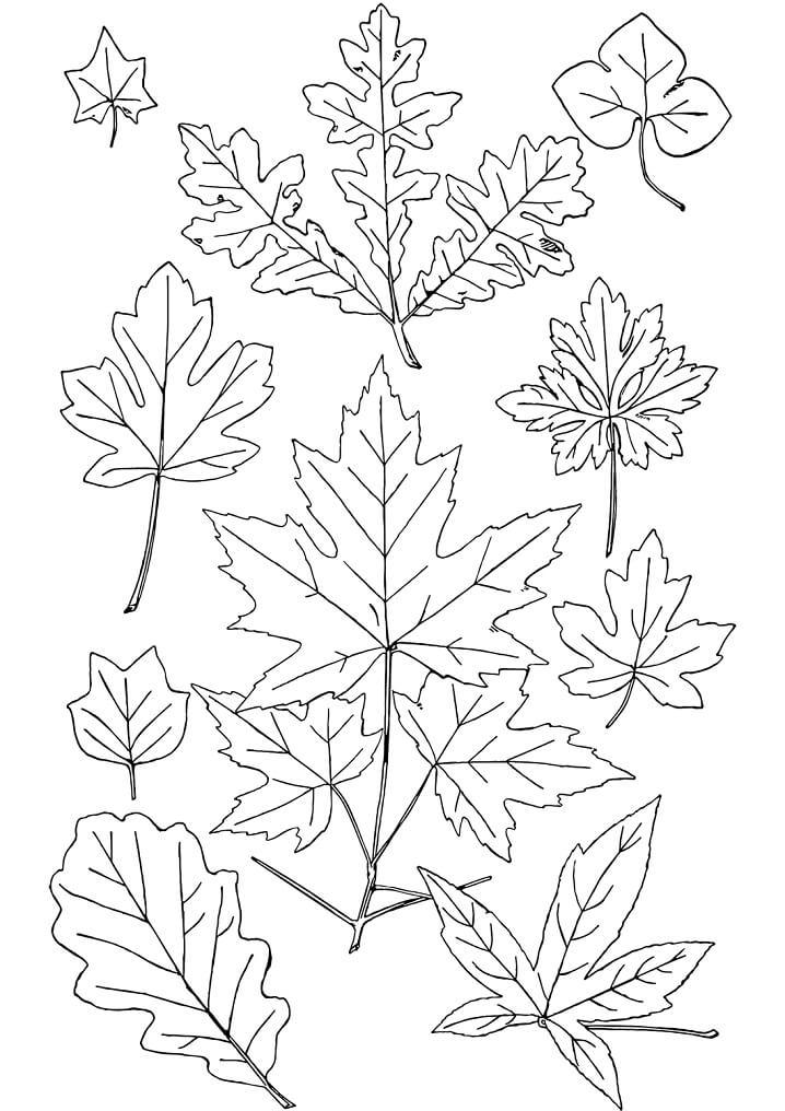 Раскраска Осенние листья 17