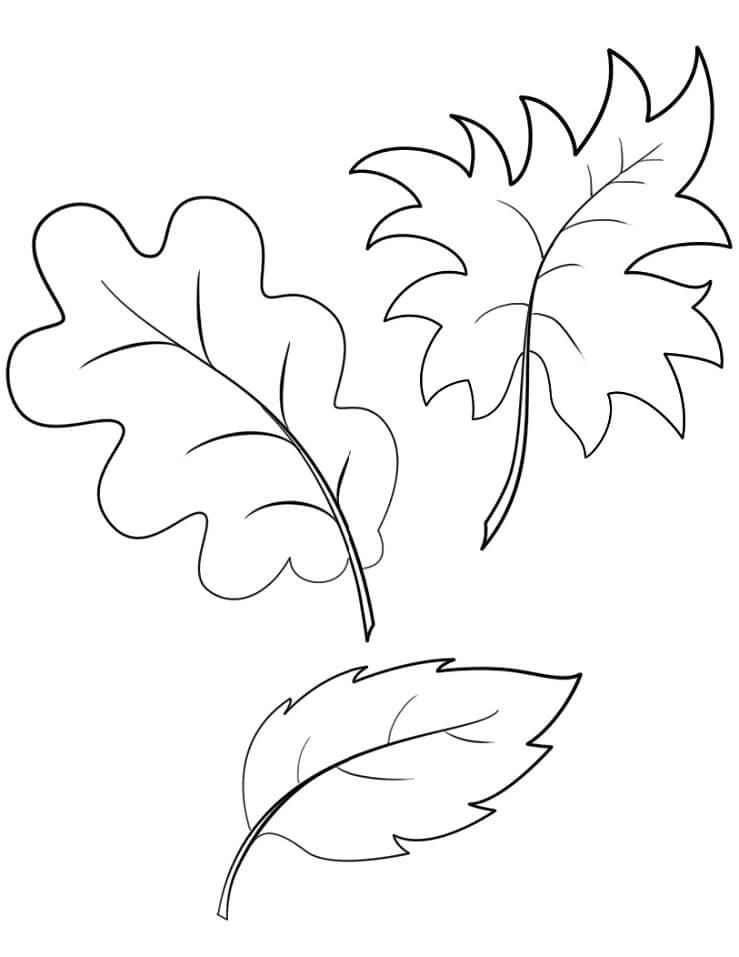 Раскраска Осенние листья 18