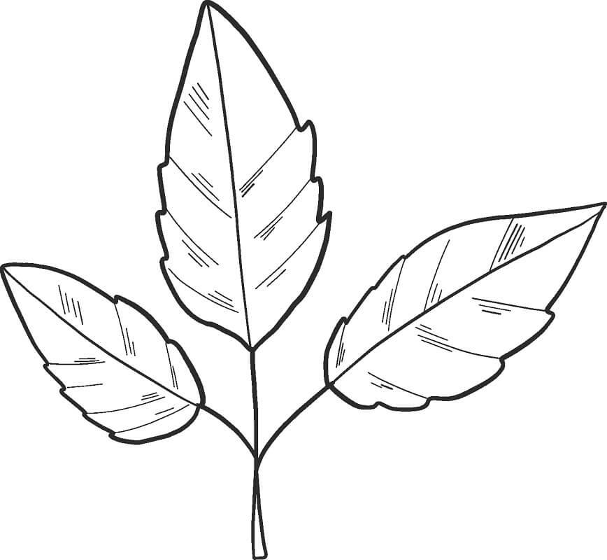Раскраска Осенние листья 19