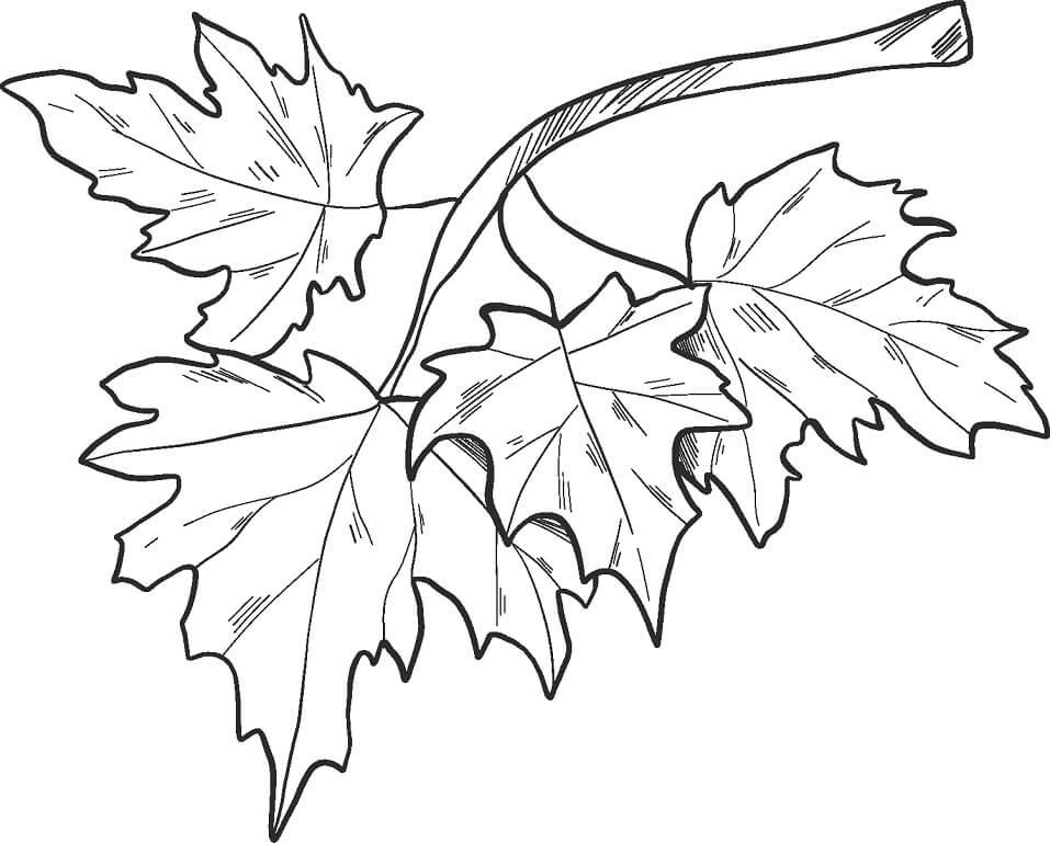 Раскраска Осенние листья 20