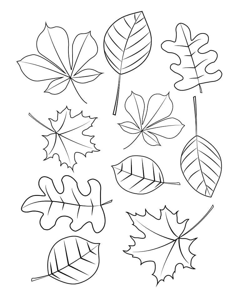Раскраска Осенние листья 4