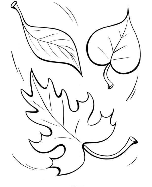 Раскраска Осенние листья 7