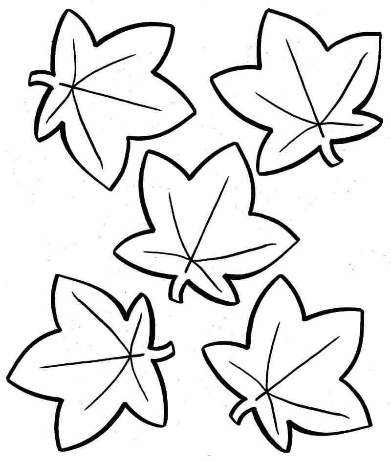 Раскраска Осенние листья 8