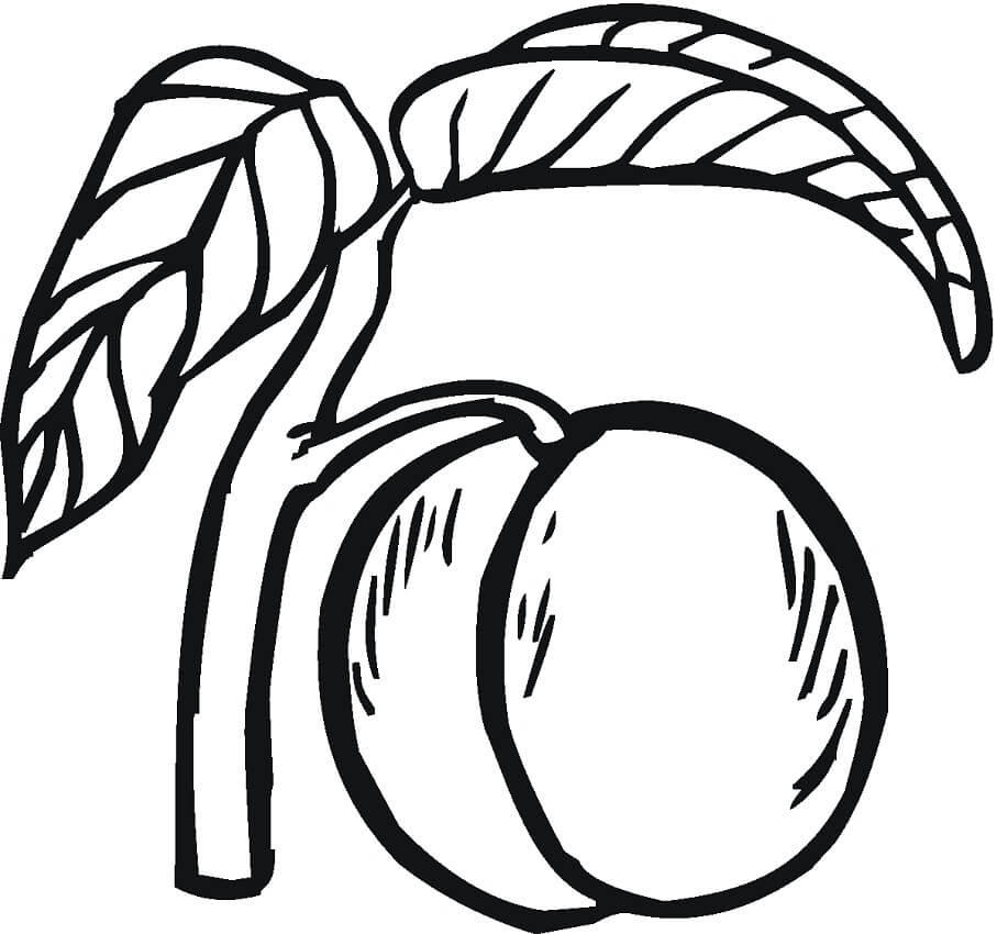 Раскраска Персик 1