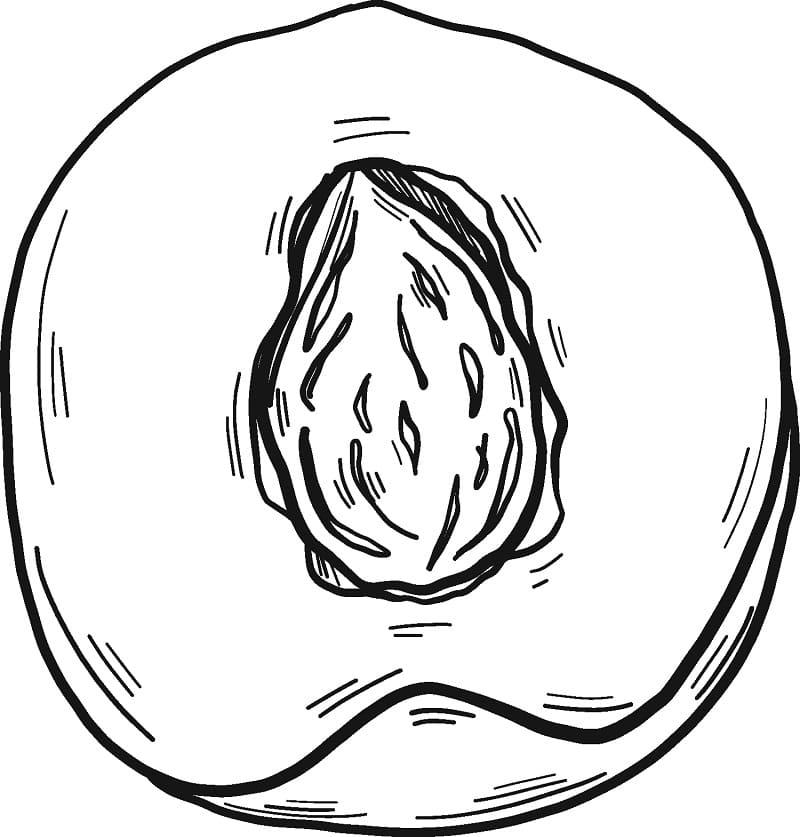 Раскраска Персик 12
