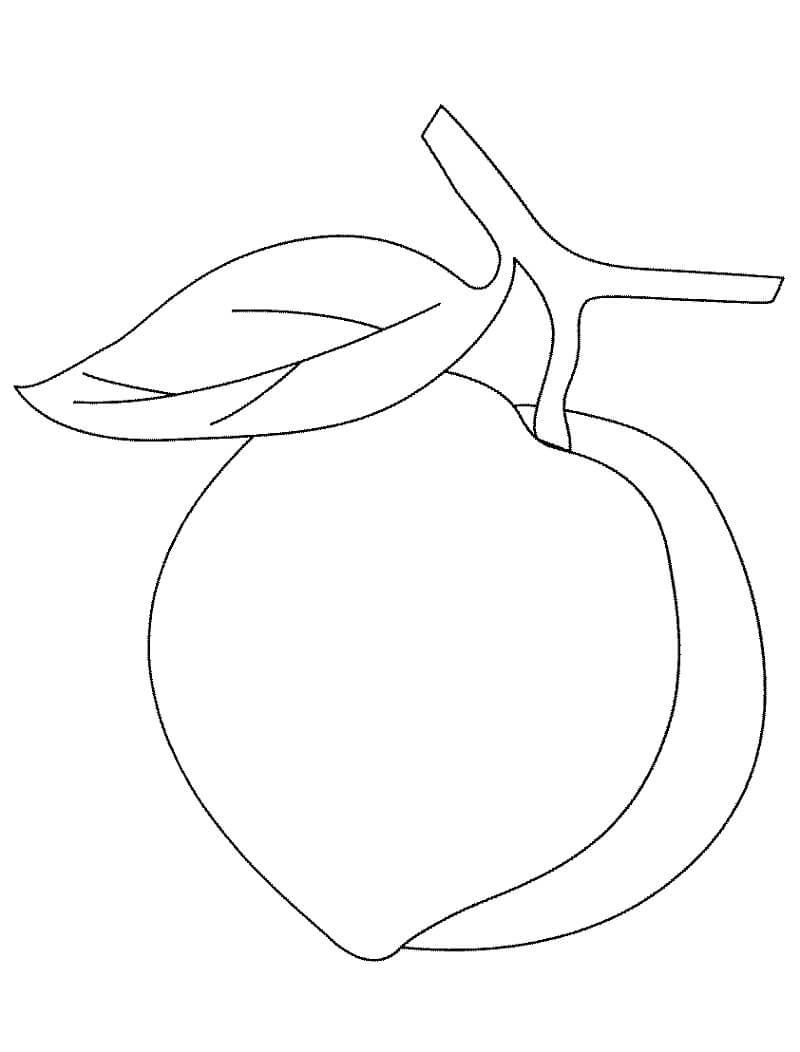 Раскраска Персик 6