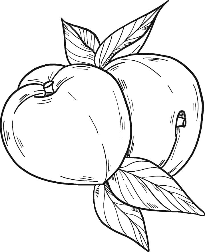 Раскраска Персики 12