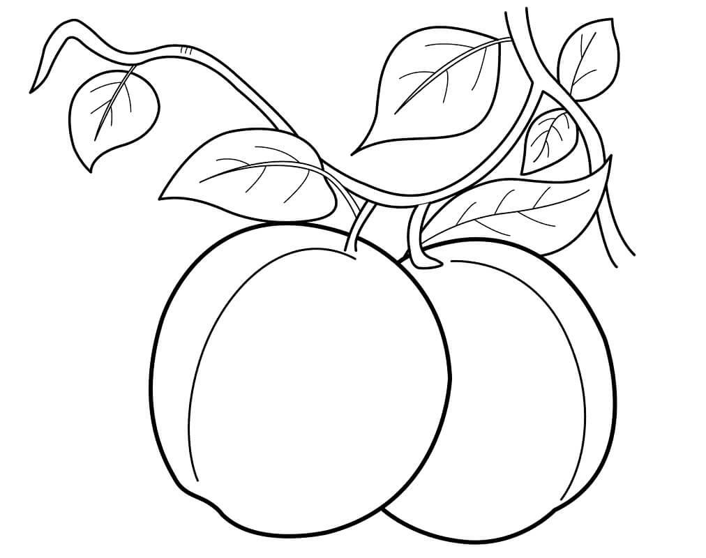 Раскраска Персики 4