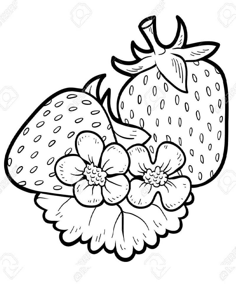 Раскраска плоды клубники 4
