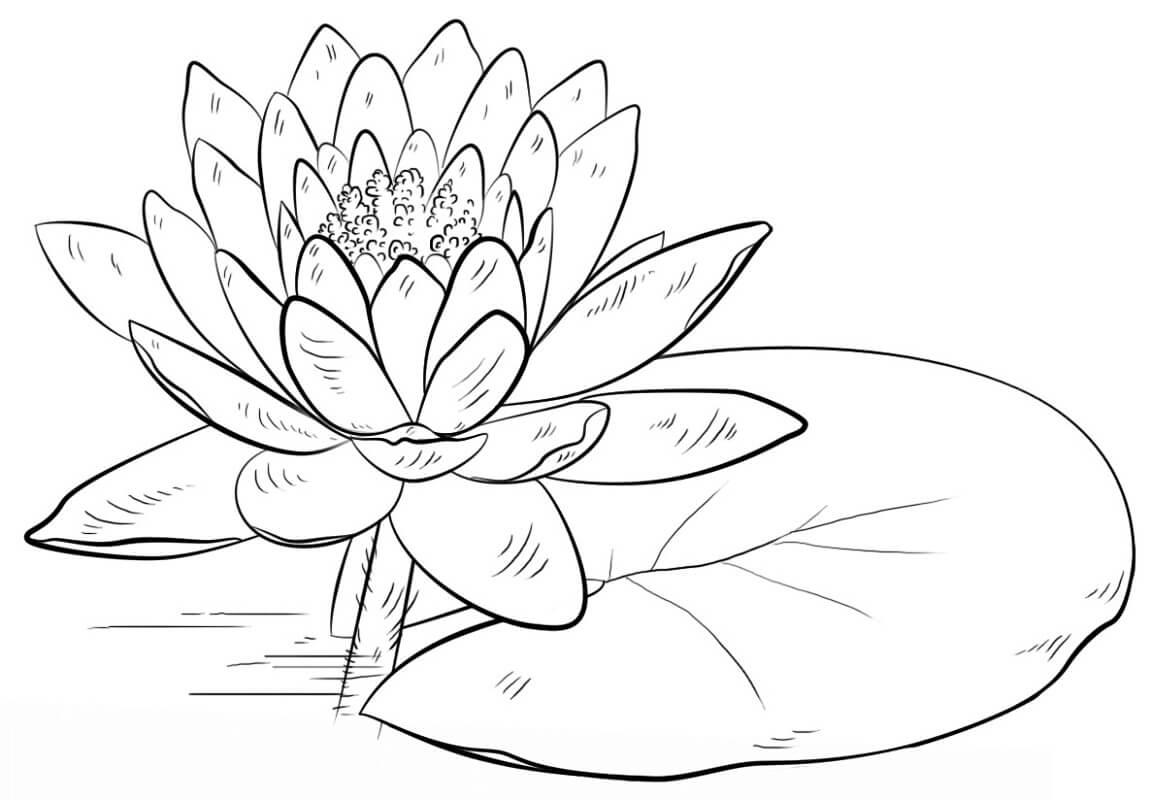 Раскраска прекрасная водяная лилия 2