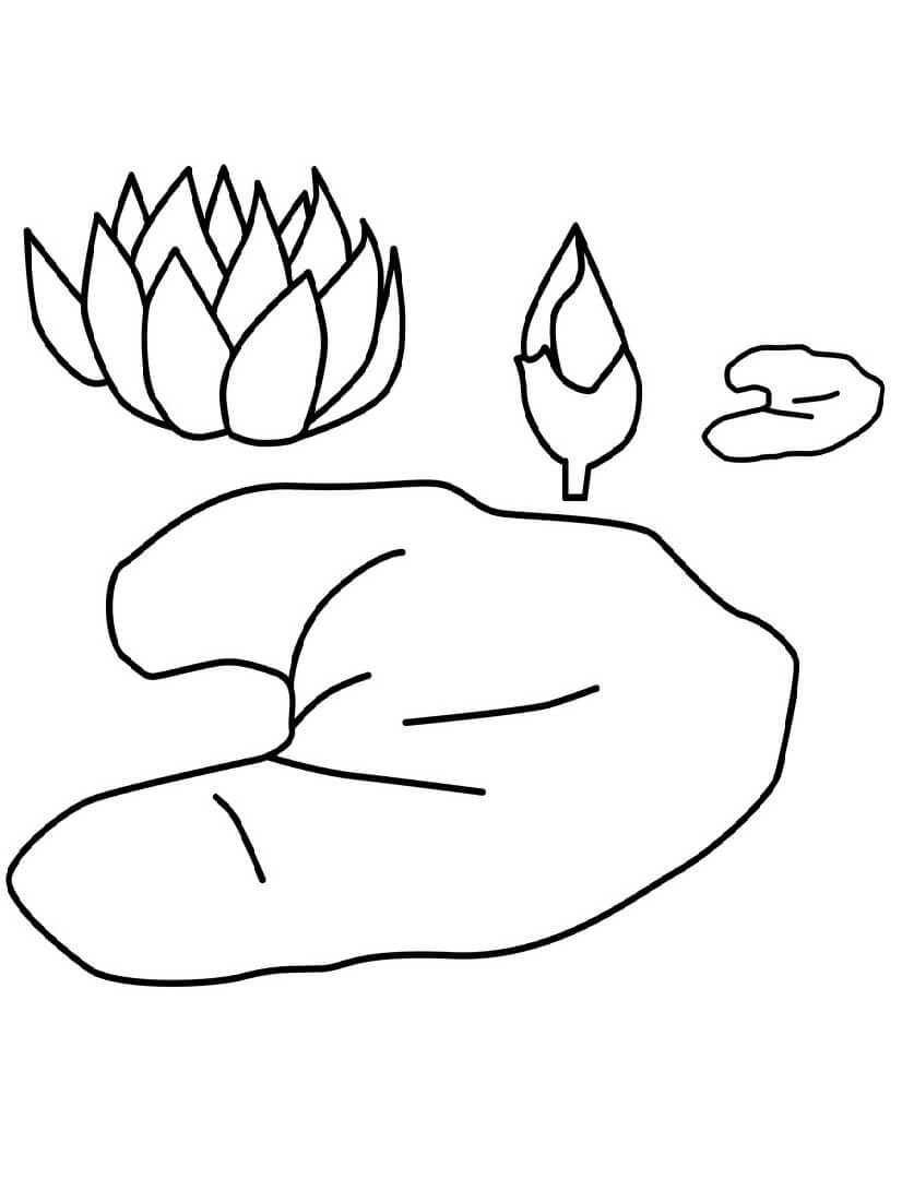Раскраска прекрасная водяная лилия 4