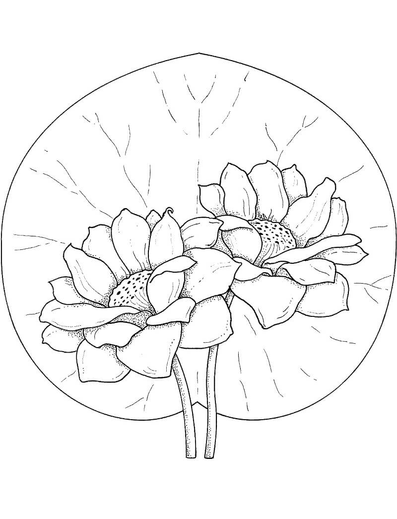 Раскраска прекрасная водяная лилия