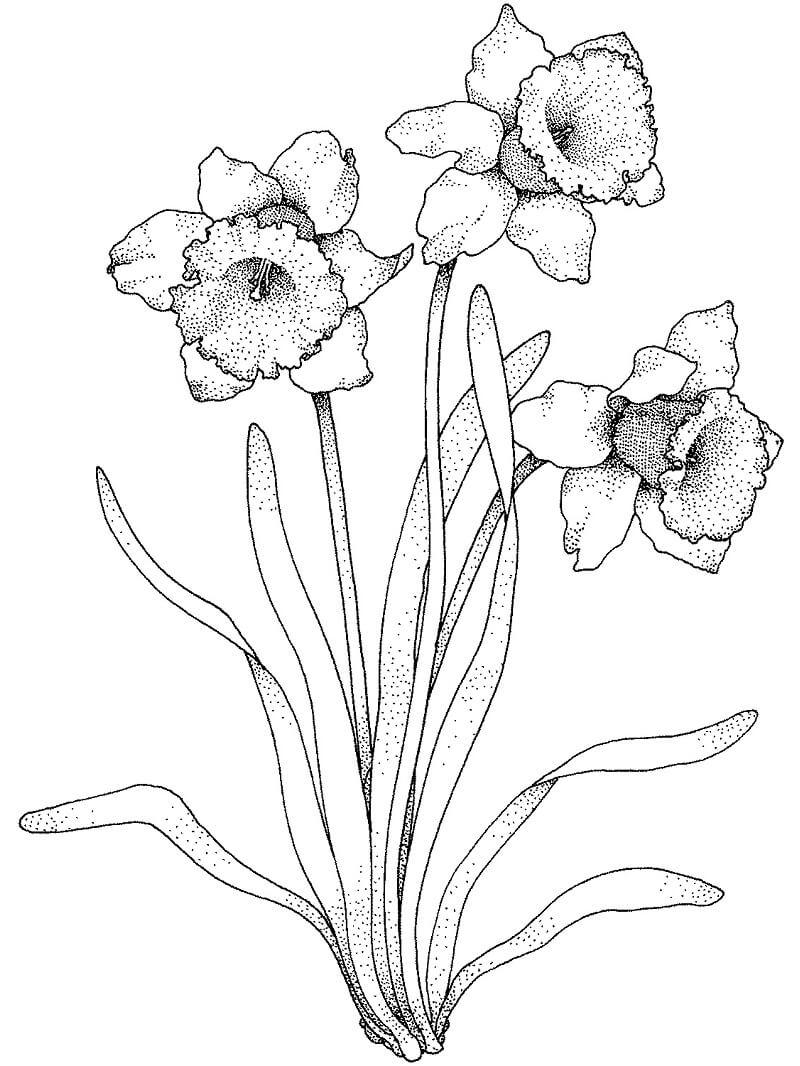 Раскраска прекрасный цветок
