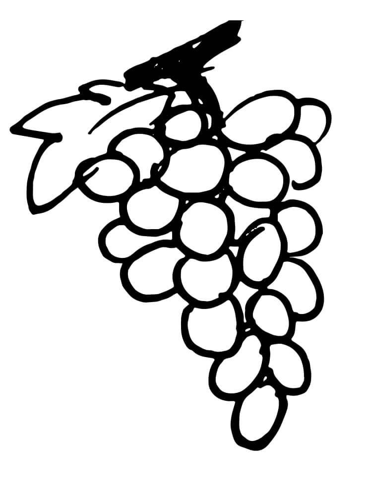 Раскраска простой виноград 1