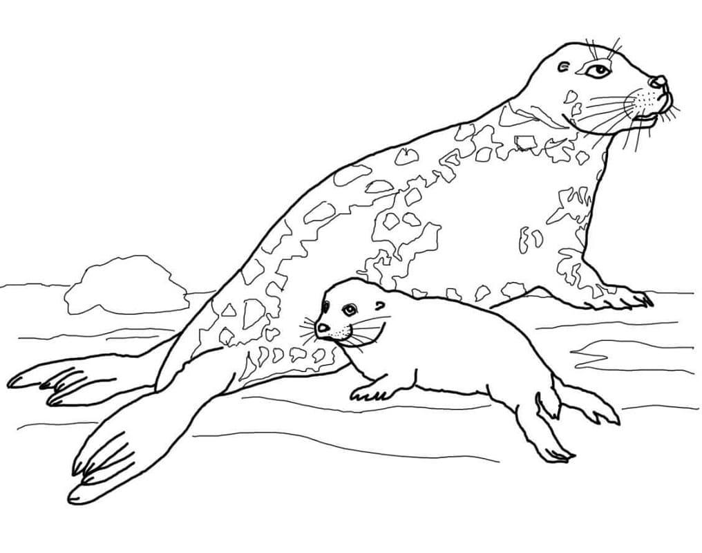 Раскраска Самка длинномордого тюленя