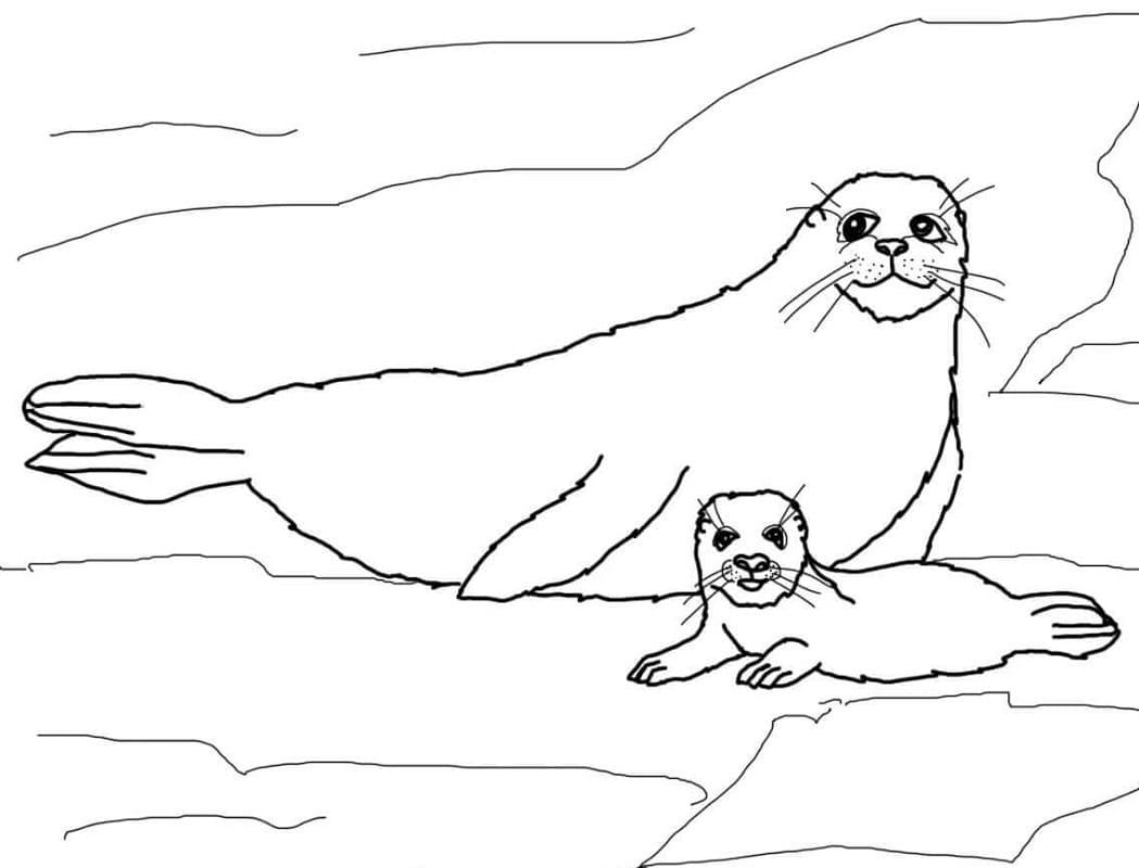 Раскраска Самка гренландского тюленя и детёныш