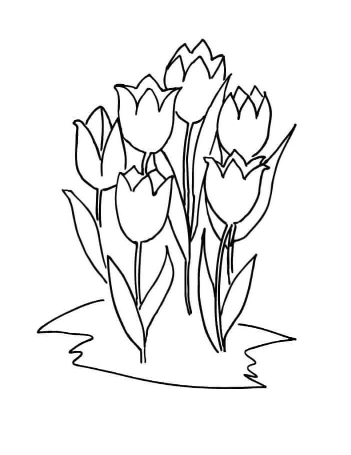 Раскраска пять тюльпанов