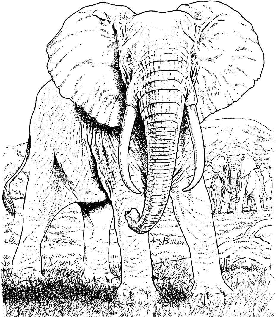 Раскраска слоны 2