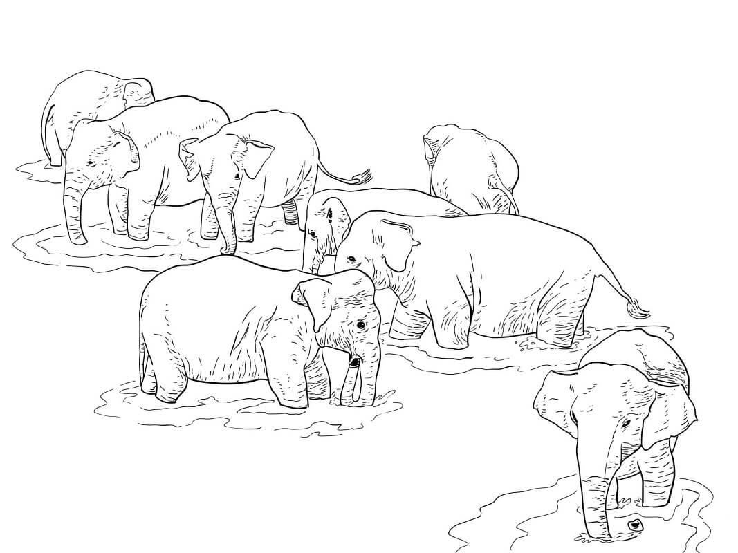 Раскраска слоны 3