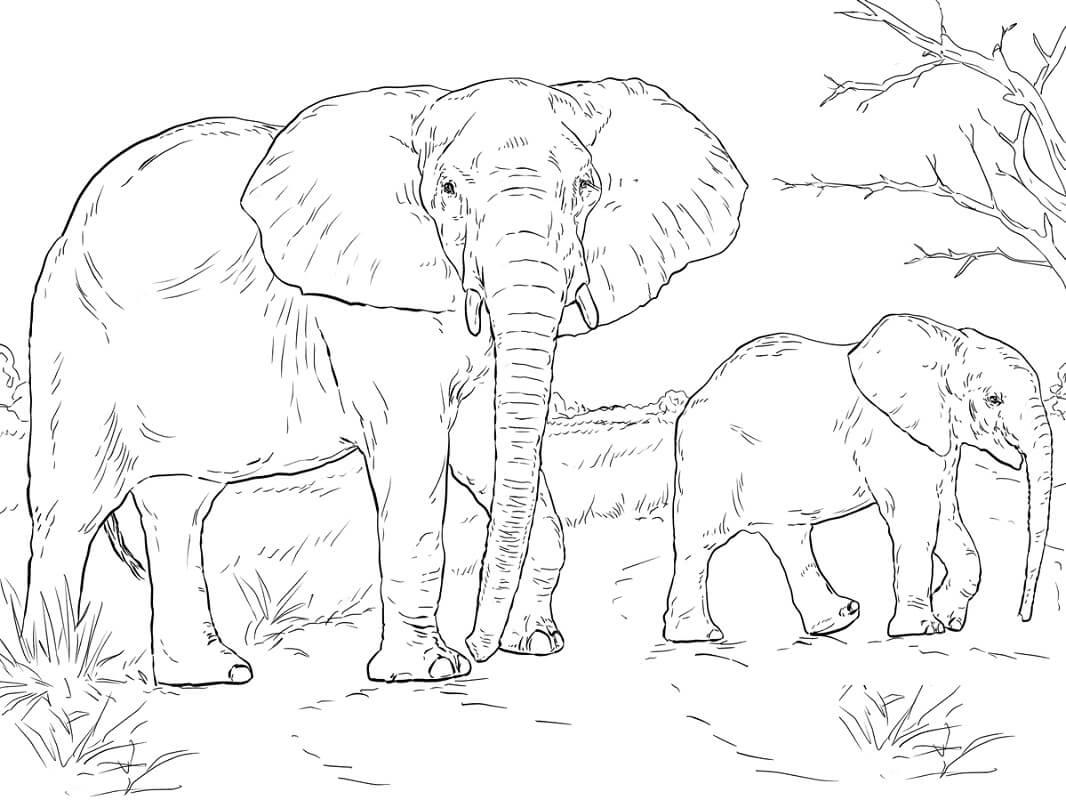 Раскраска слоны 4