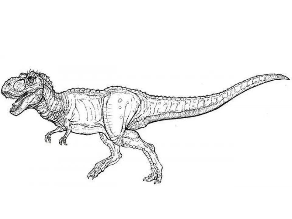 Раскраска Тираннозавр 3
