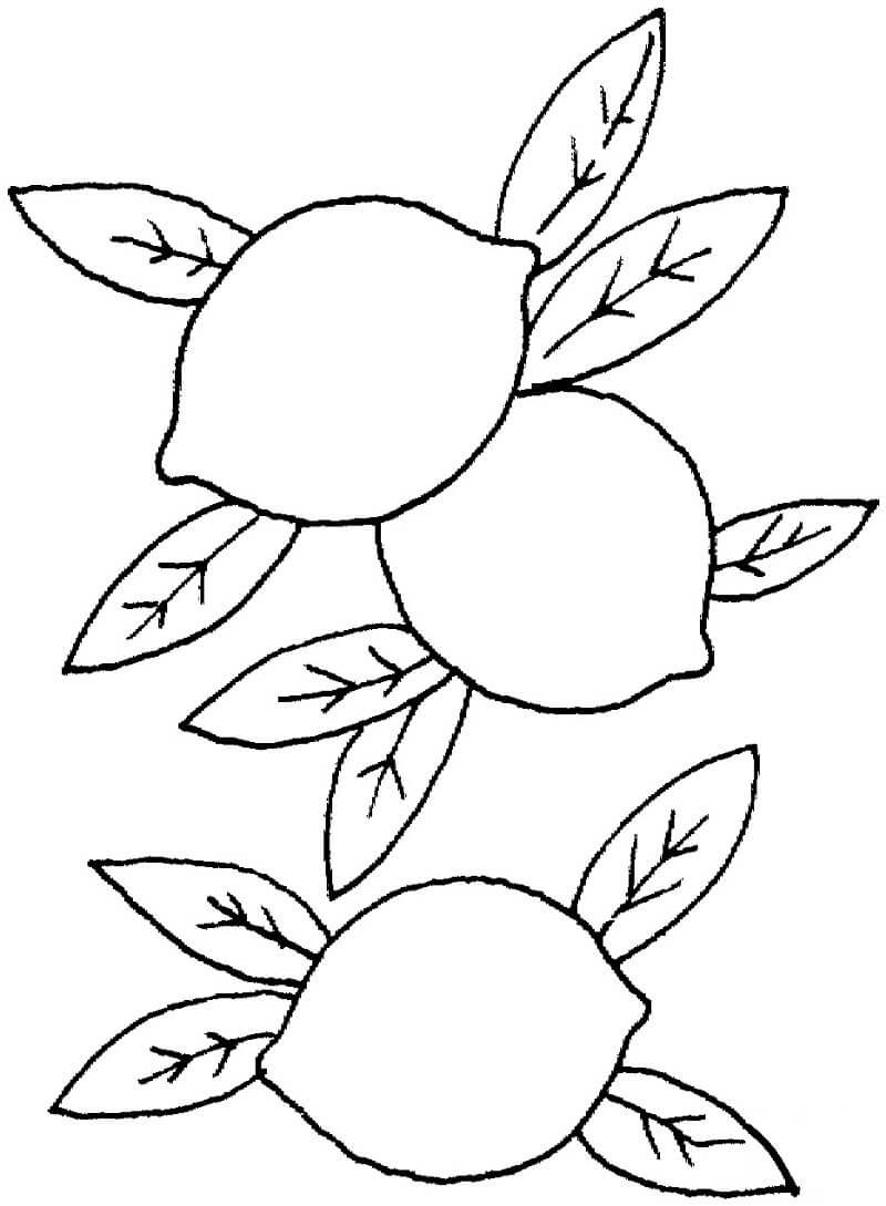 Раскраска Раскраски Лимон
