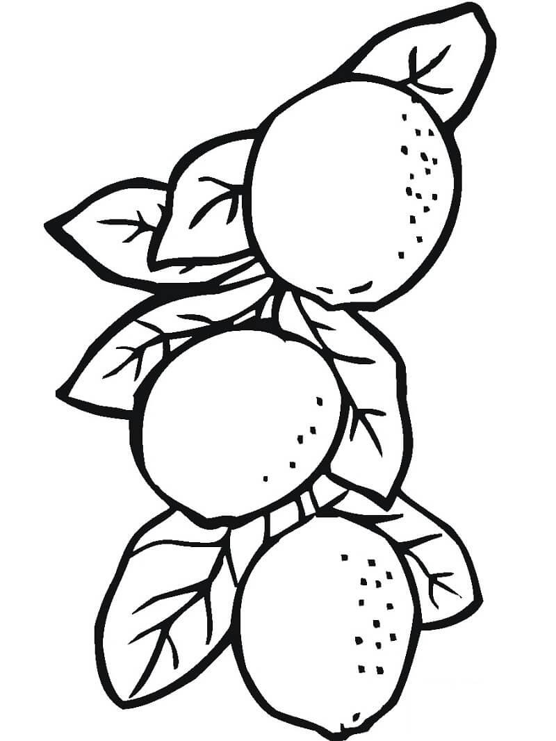 Раскраска три лимоны