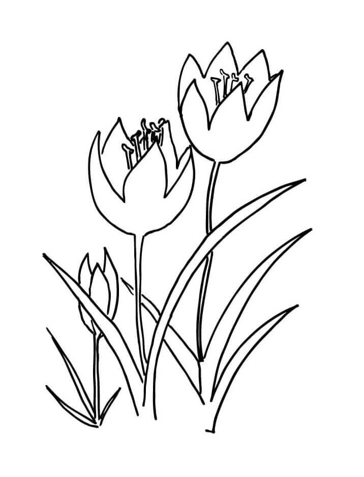 Раскраска три тюльпана 1