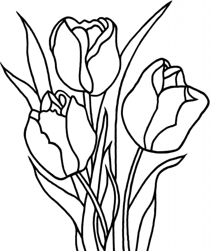 Раскраска Раскраски Тюльпан