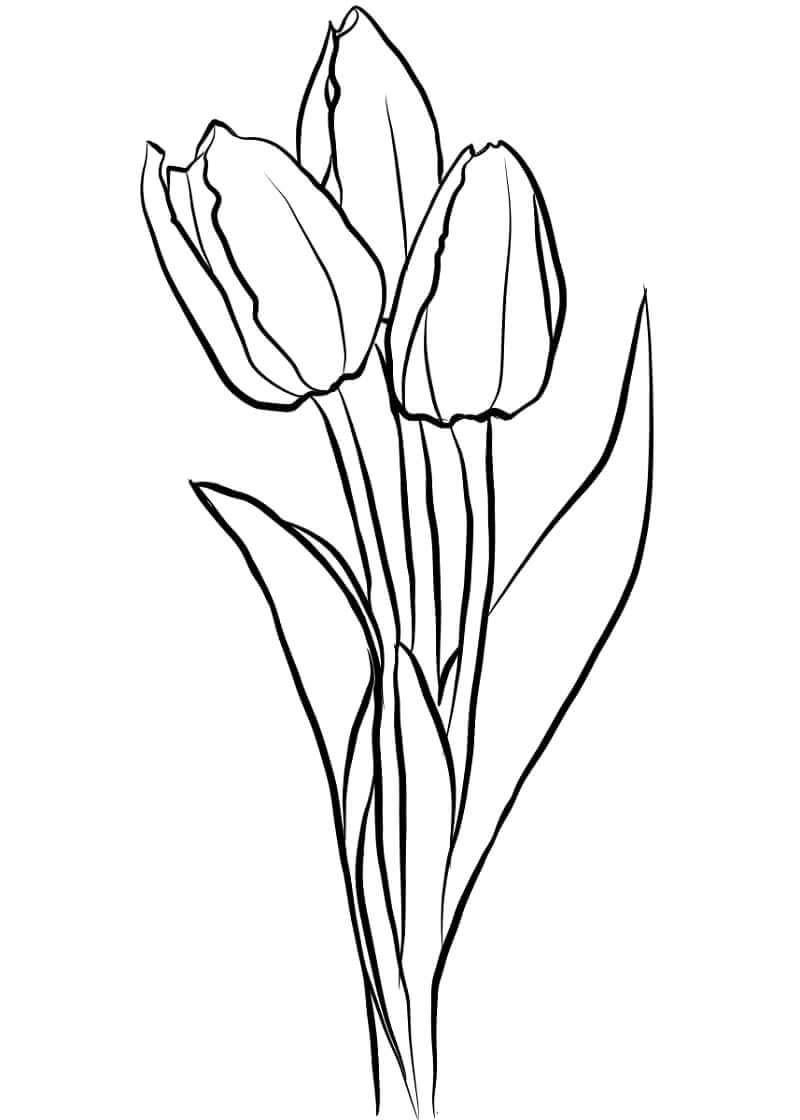 Раскраска тюльпанов