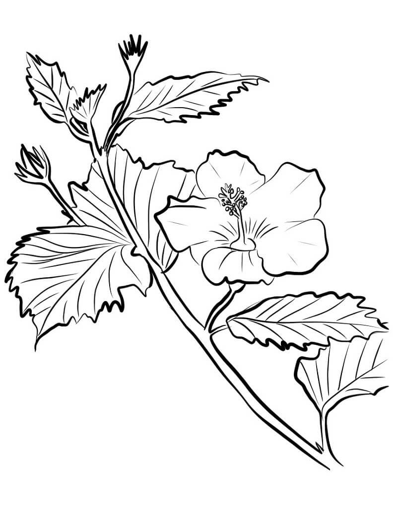 Раскраска Цветок гибискус 1