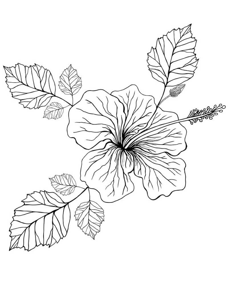 Раскраска Цветок гибискус 2