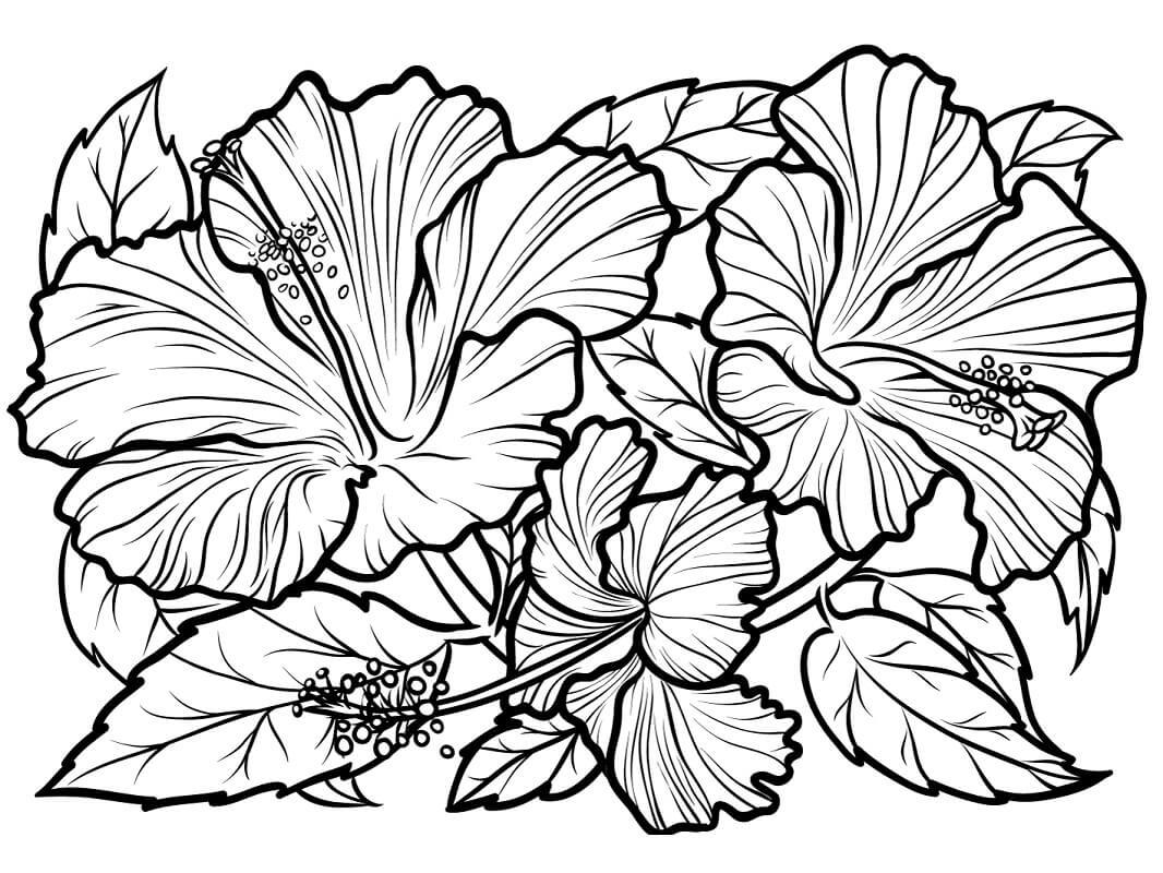 Раскраска Цветок гибискус 3