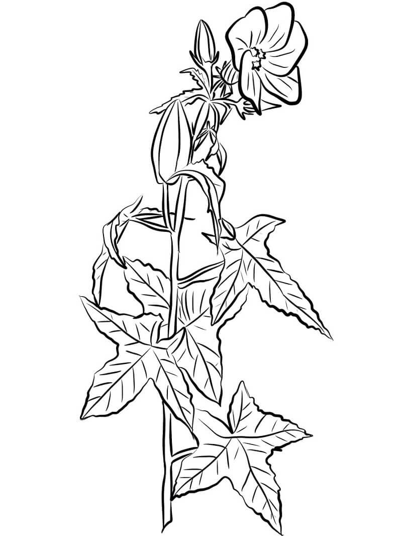 Раскраска Цветок гибискус 4