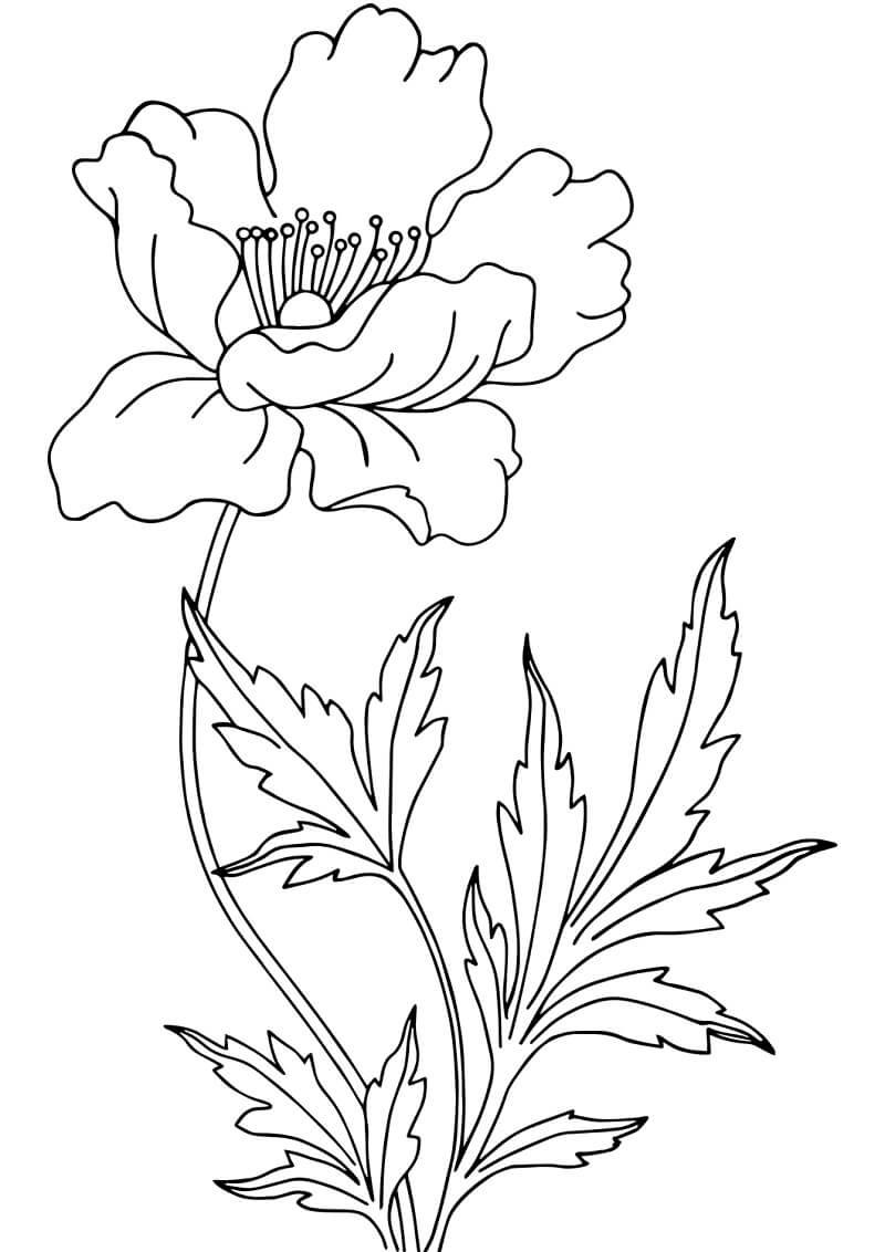 Раскраска Цветок Мака 3