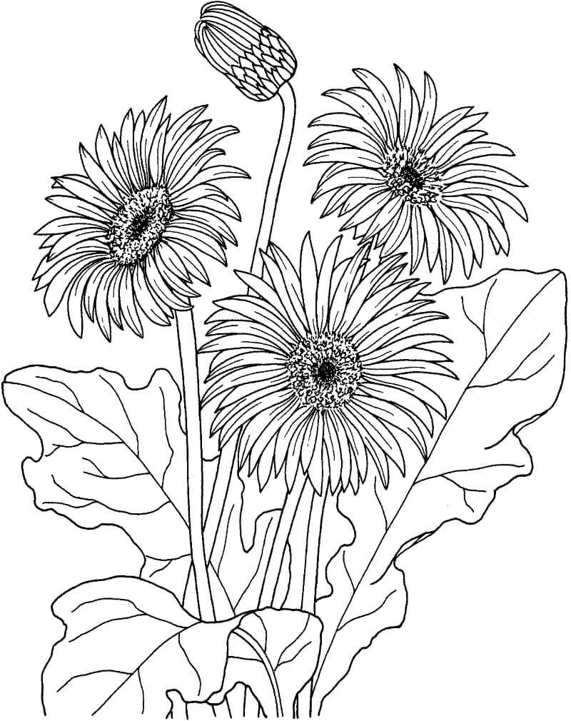 Раскраска цветы ромашки 1