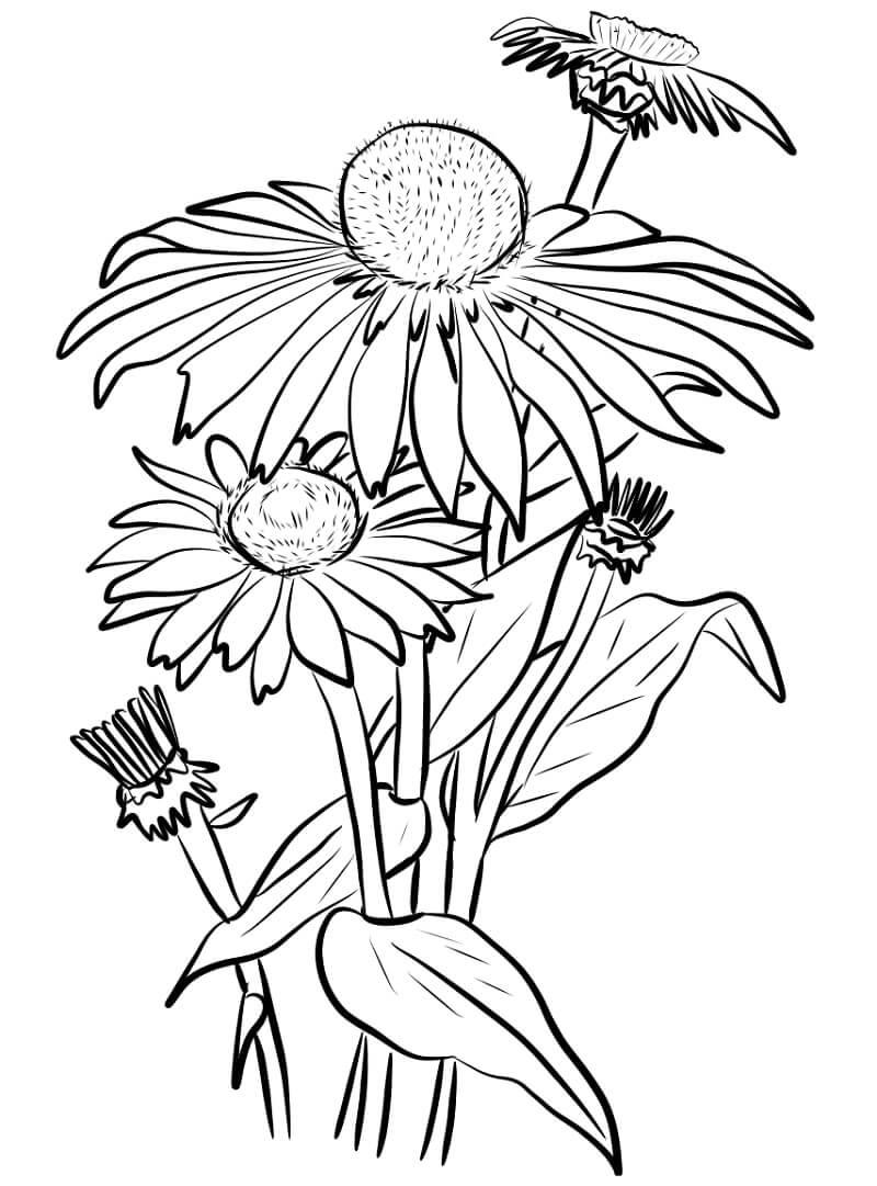 Раскраска цветы ромашки 4