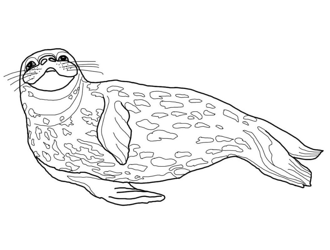 Раскраска Тюлень Уэдделла