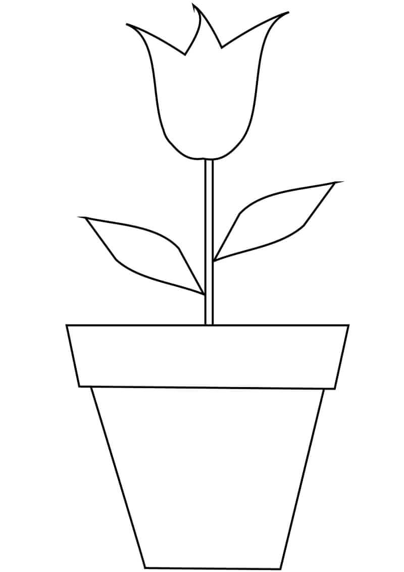 Раскраска тюльпан в горшке