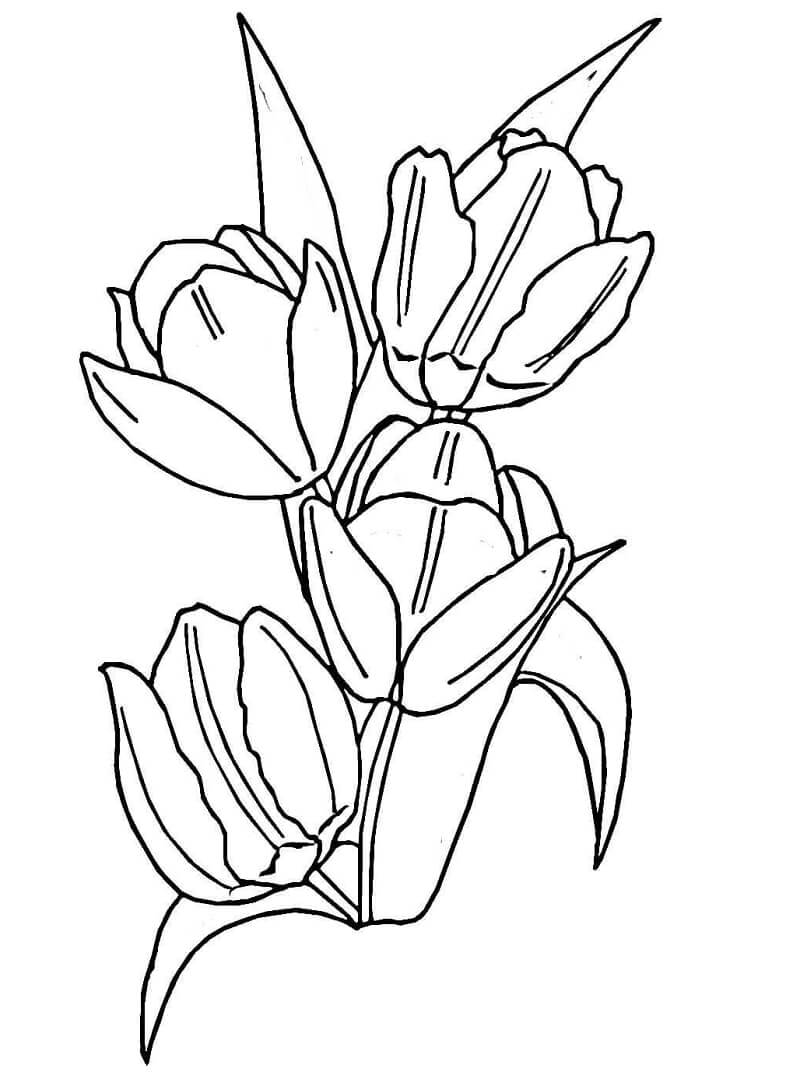 Раскраска Тюльпаны 1